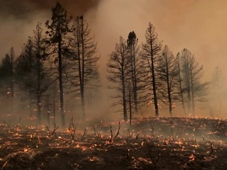 Запад США охвачен лесными пожарами