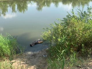 Плавали на бревне: девочки-близнецы утонули в Волгоградской области