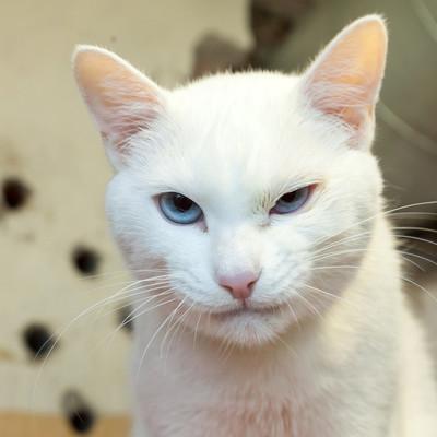 В Эрмитаже завтра пройдет праздник, посвященный котам музея