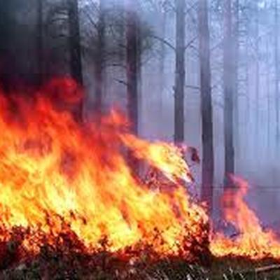 За сутки в России удалось потушить более ста лесных пожаров