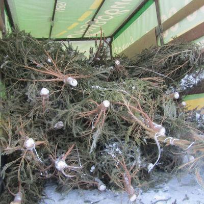 Более 22 тысяч новогодних деревьев сдали на переработку жители Москвы