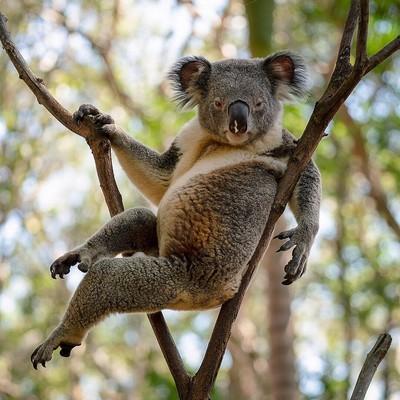 В Австралии собрали более 430 тысяч долларов на помощь коалам, пострадавшим от лесных пожаров