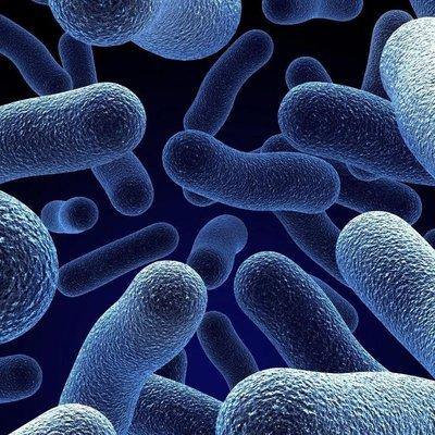 Одной из ключевых причин развития рака могут быть бактерии