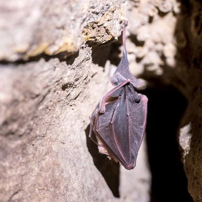 Новый опасный коронавирус на 90% схож с коронавирусом летучей мыши