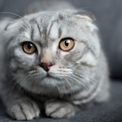 Первый случай заражения домашней кошки Ковид-19 выявлен в Швейцарии