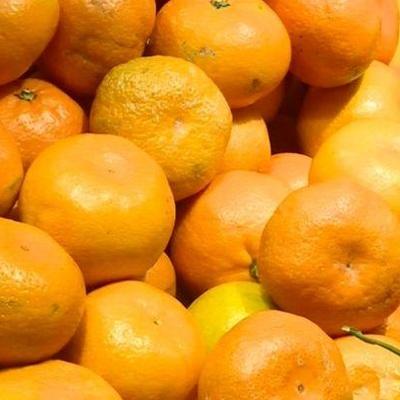 Роспотребнадзор приостановил ввоз мандаринов из Турции
