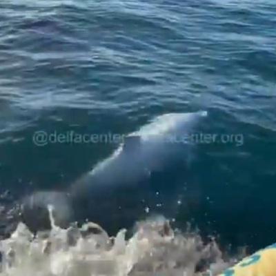 Дельфина, застрявшего на мелководье под Владивостоком, вывезли на глубину