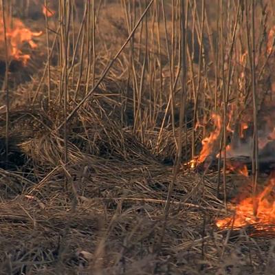 В Самарской области загорелись 10 дачных строений и 2 гектара сухой травы