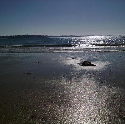 Восемь кашалотов выбросились на берег в Новой Зеландии и погибли
