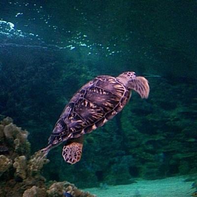 Рыбаки на Кипре стали представлять угрозу для морских черепах