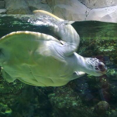 Черепаха, которая проглотила 915 монет разных стран мира, скончалась в ветеринарной клинике