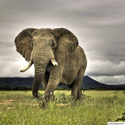 Слона по кличке бен Ладан обезвредили в Индии