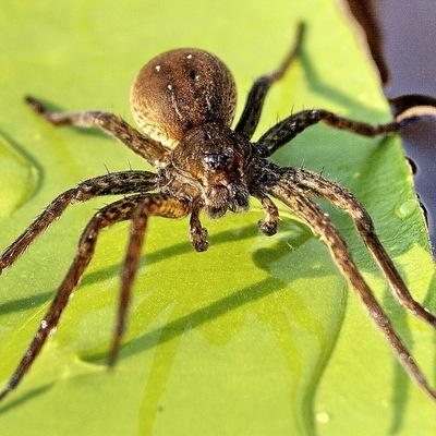 В Москве стали чаще встречаться полезные насекомые