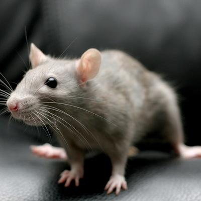 В Казахстане пара мышей забралась в банкомат и погрызла купюры