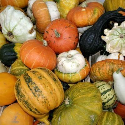 Тыква признана самым омолаживающим овощем