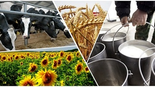 Растениеводство и животноводство   фото подольск-администрация.рф