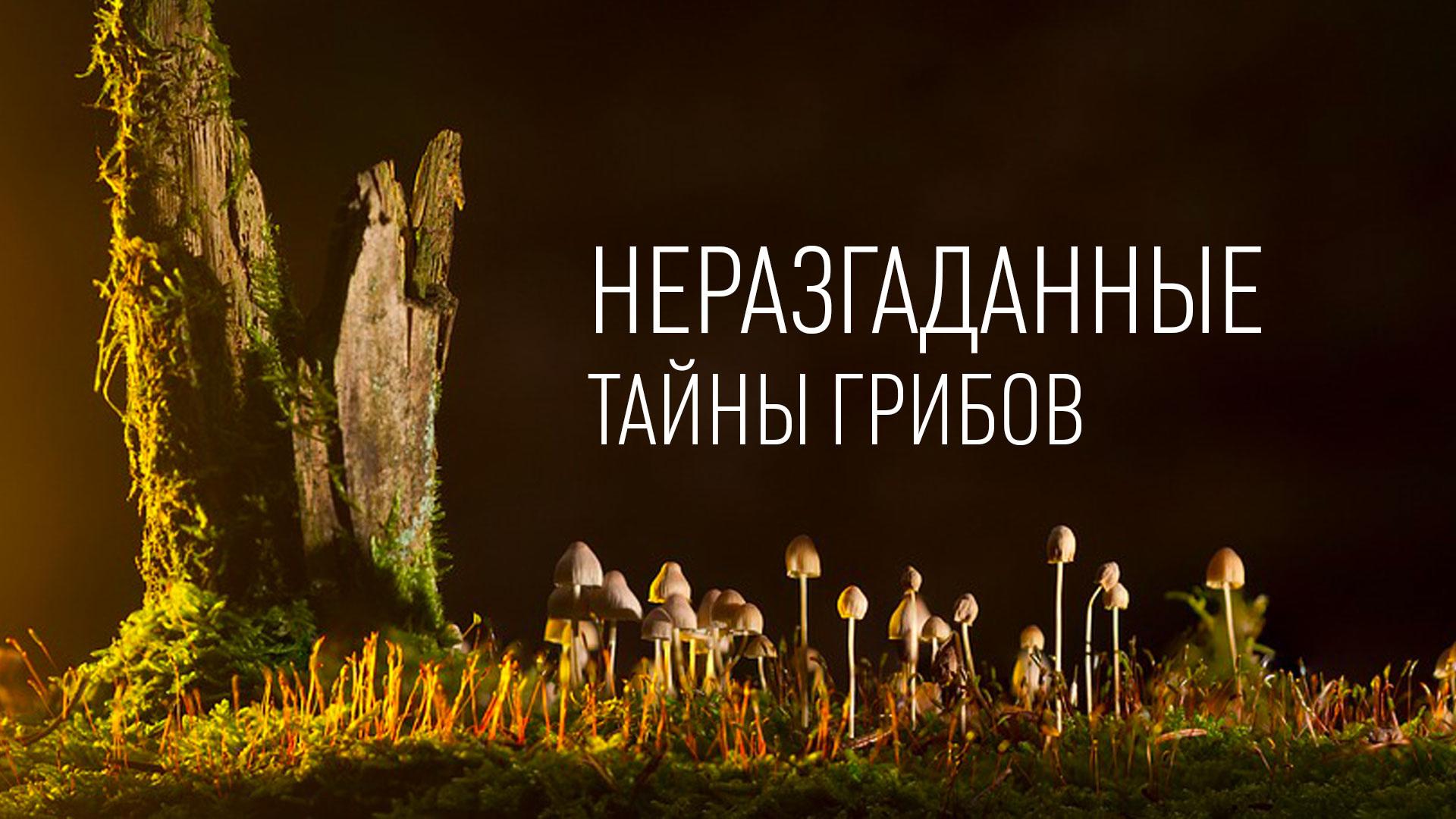 Неразгаданные тайны грибов