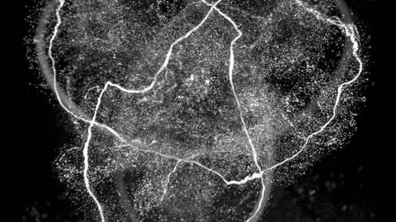 Физики научились завязывать воду в узлы