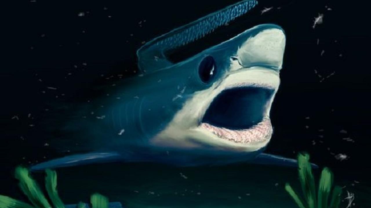 Древние шипастые акулы пережили массовое пермское вымирание