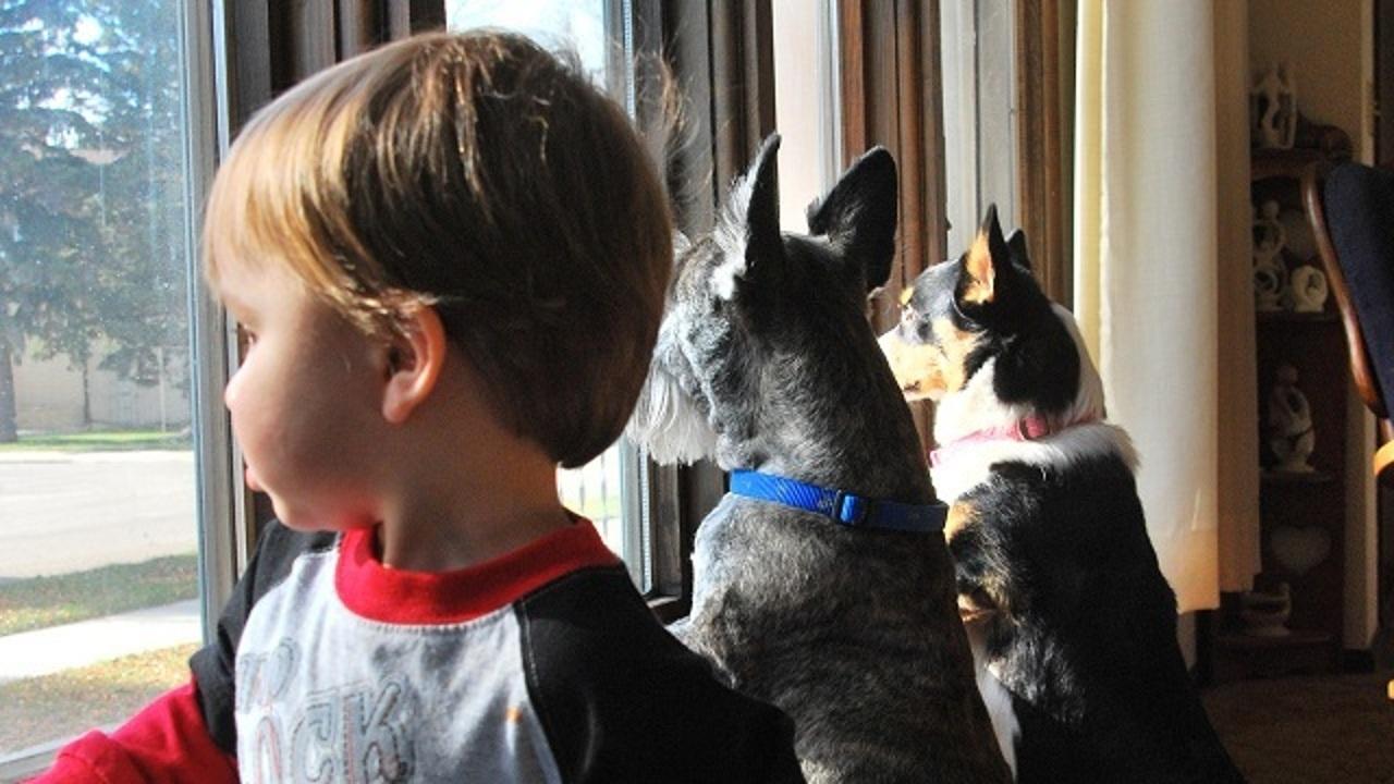 Бактерия, способная избавить человека от аллергии и астмы, обнаружена в домашних животных