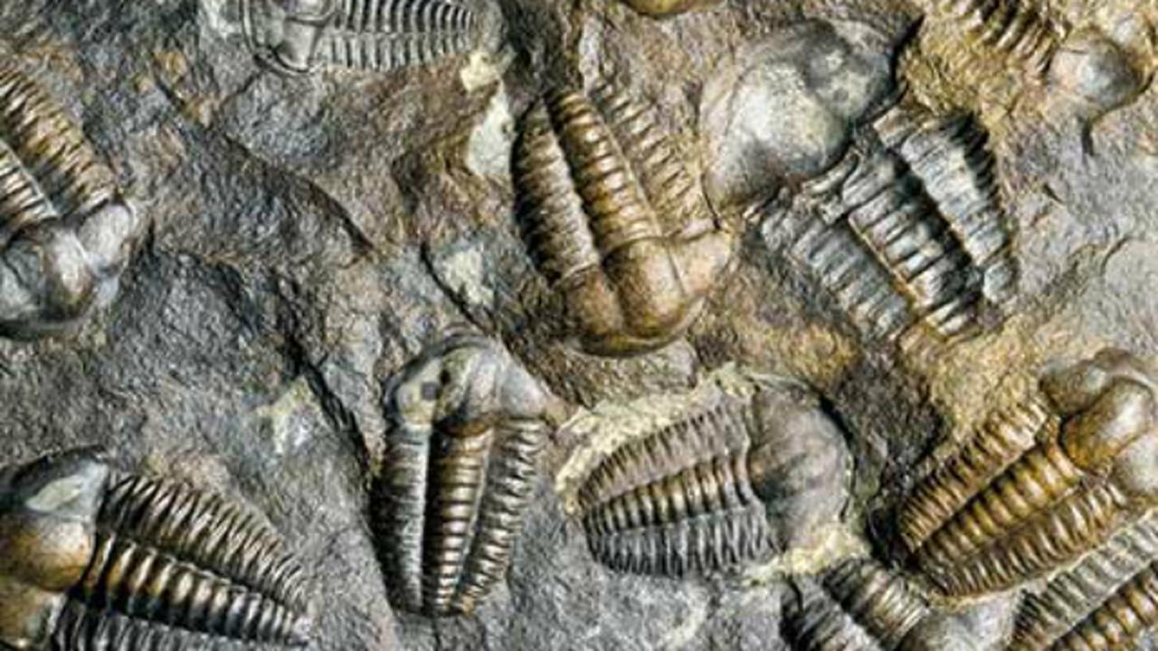 Обнаружены следы еще одного глобального вымирания видов