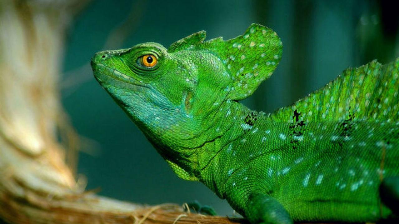 Экологи подтвердили наступление эпохи шестого массового вымирания