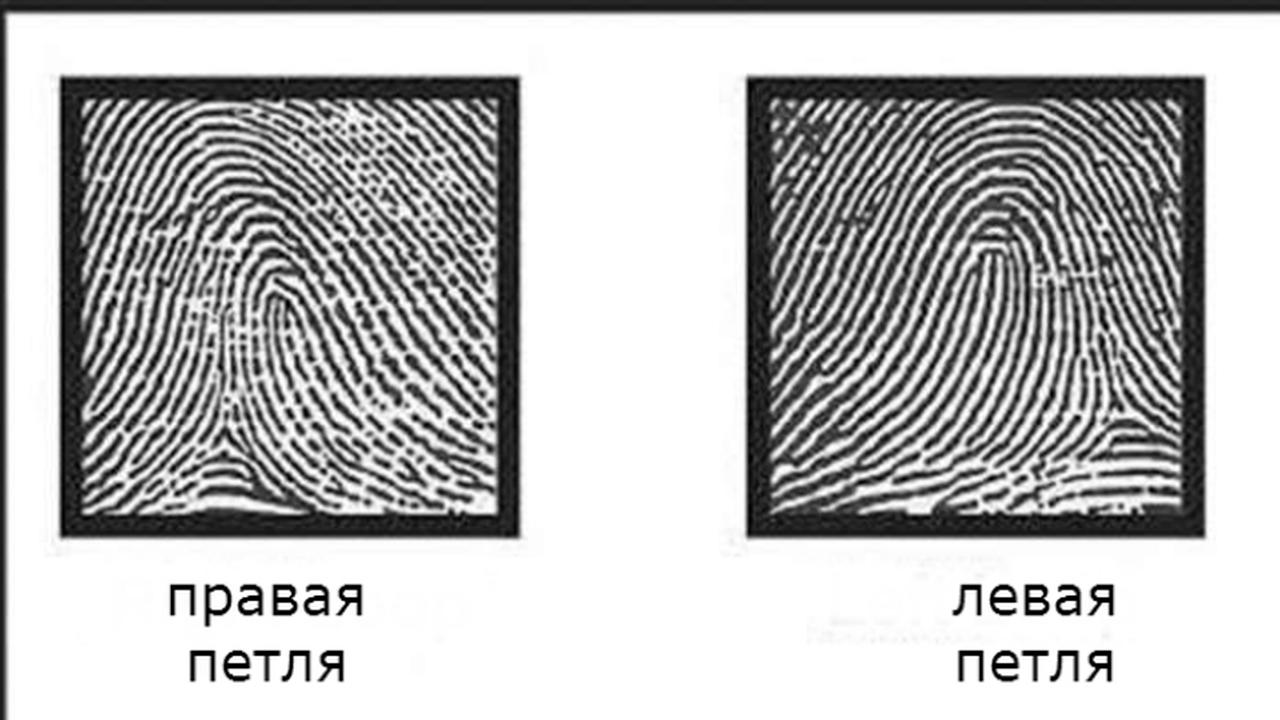 Наследственную историю можно определить по одному лишь отпечатку пальца