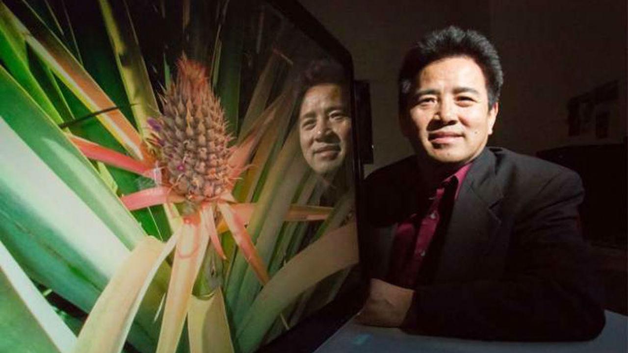 Геном ананаса раскрыл секрет устойчивых к засухе растений