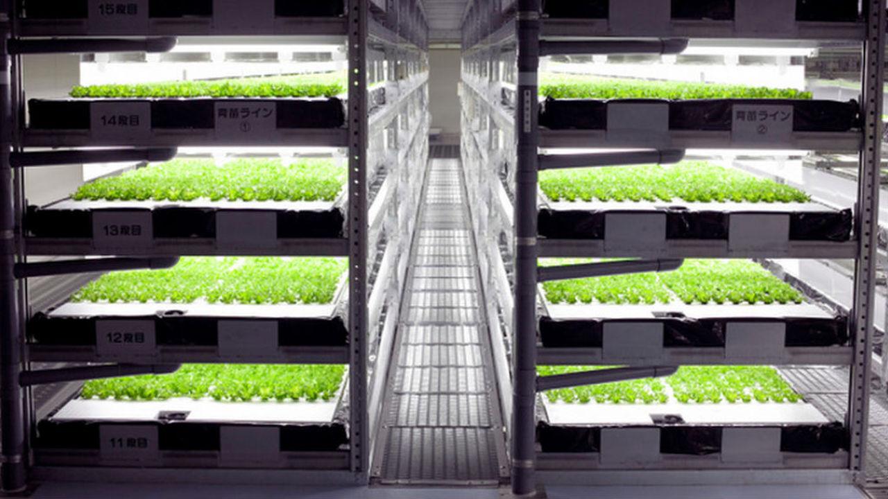 В Японии откроют первую полностью роботизированную ферму