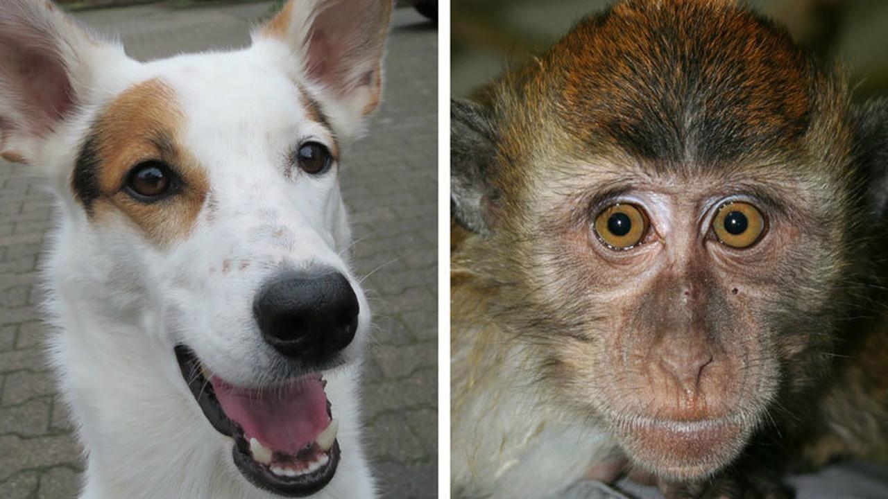 Собаки и приматы видят линии магнитного поля Земли