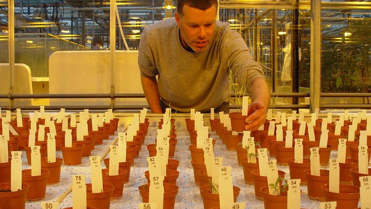 На имитации марсианской и лунной почв выросли первые растения