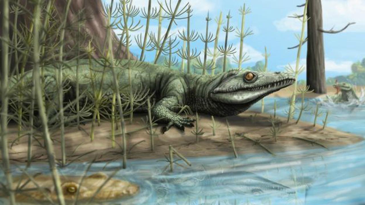 """Палеонтологи обнаружили в Бразилии 250-миллионолетнюю """"парадоксальную"""" рептилию"""