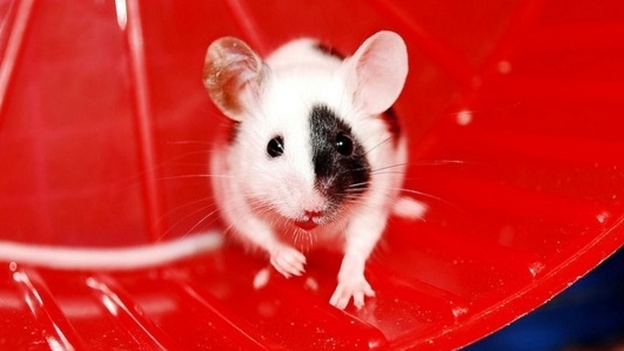 Наполненные ядом наношарики уничтожили метастазы у мышей