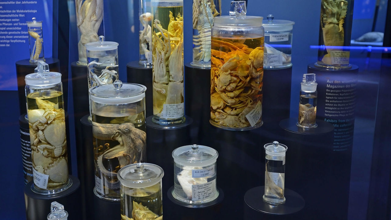 """Способ найден! Из вымерших животных, """"замаринованных"""" в музеях, извлекут ДНК"""