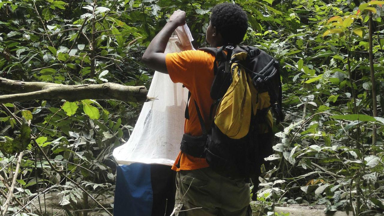 Мухи цеце и малярийные комары сами отберут кровь для поиска новых опасных заболеваний