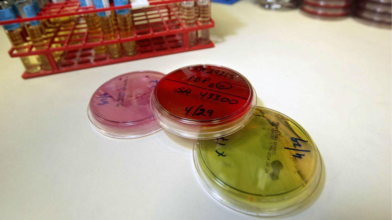 Исследователи из России составили мировую карту устойчивости к антибиотикам