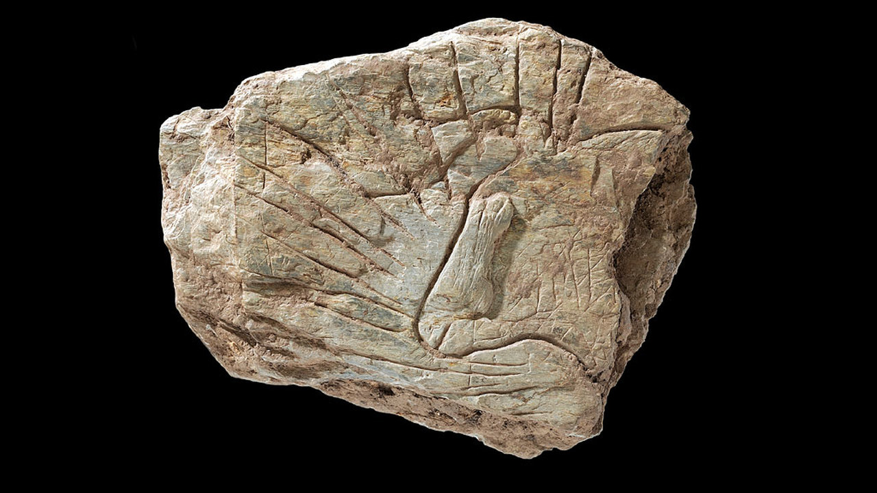 Археологи рассказали об открытии, которое пришлось скрывать несколько лет