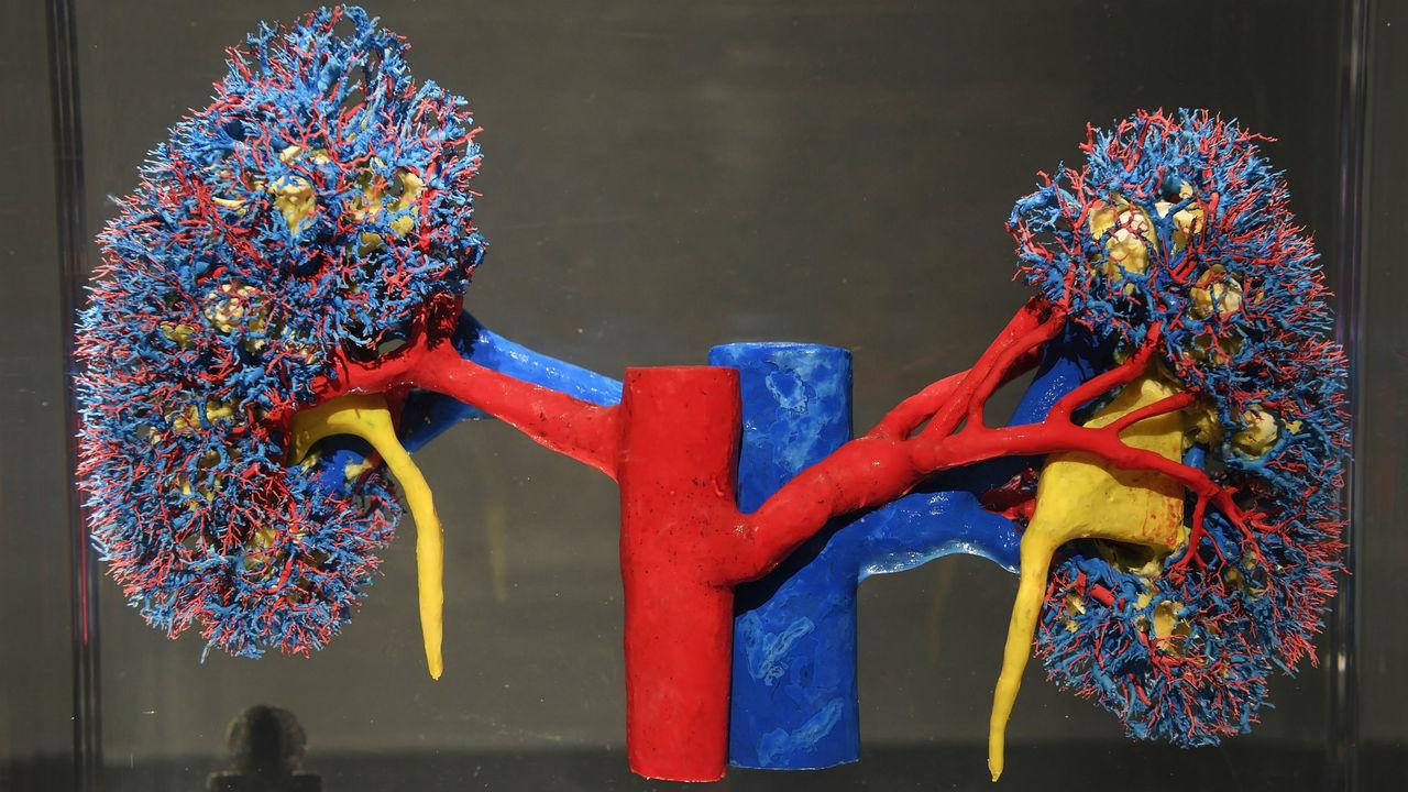 Почки больных гепатитом могут стать донорскими