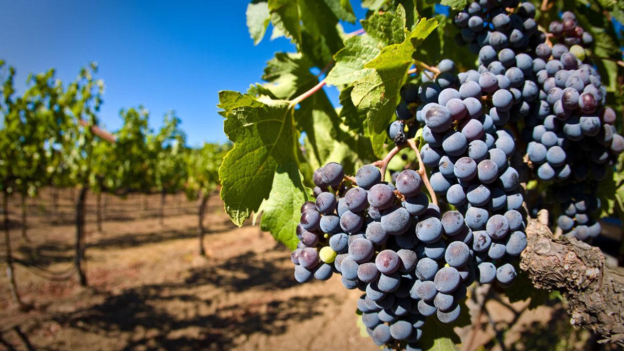 """""""Это счастливая случайность"""": в Дании археологи нашли 3000-летний виноград"""