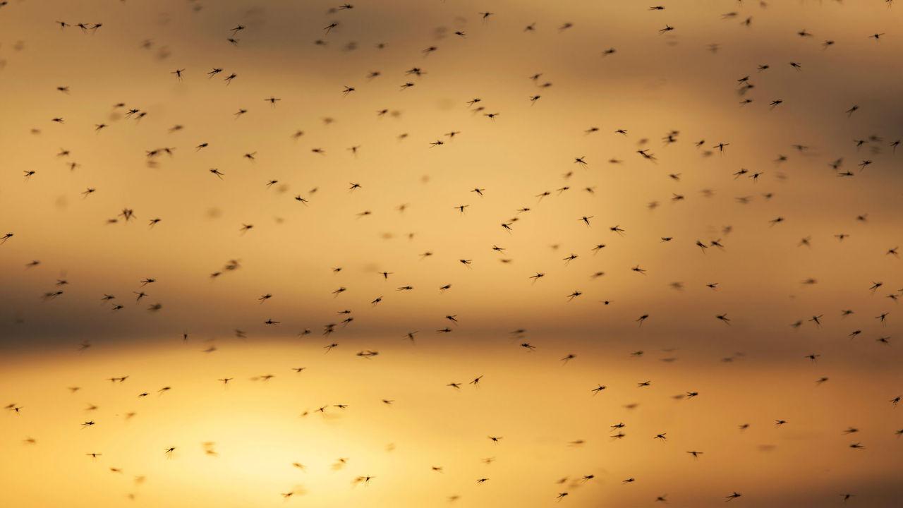 Найден эффективный способ защиты от ночных укусов комаров