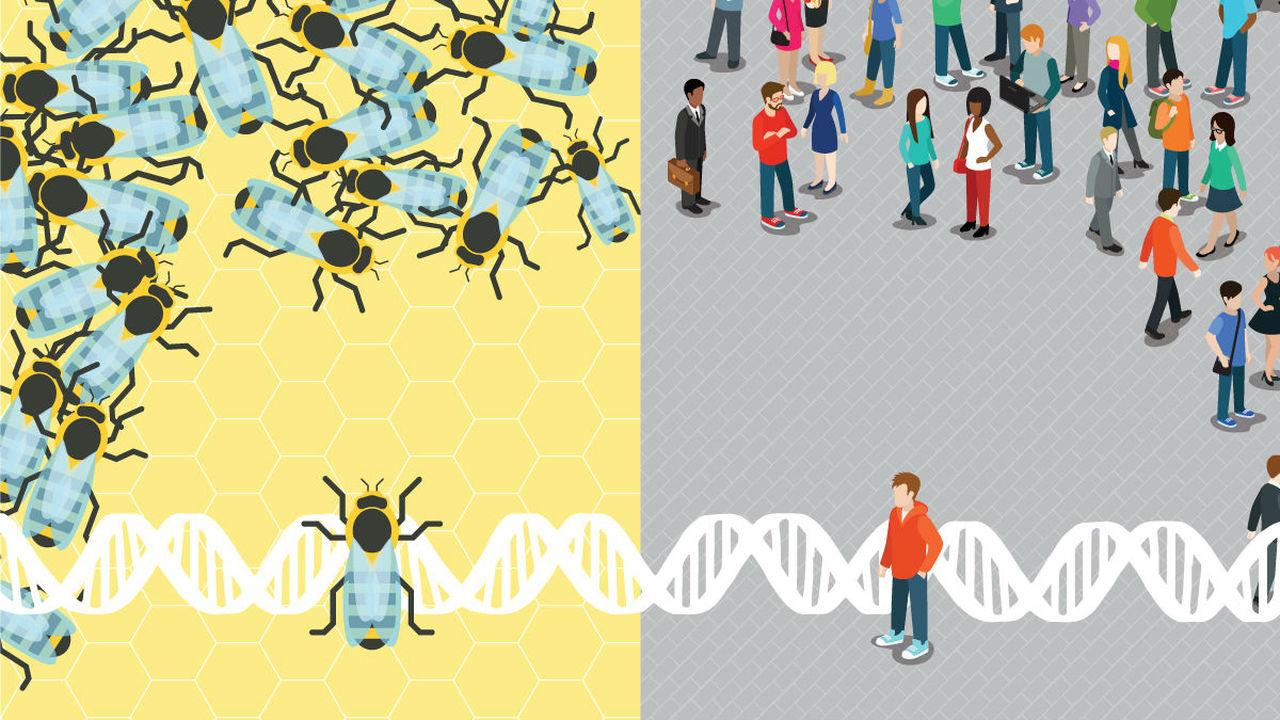 У человеческого аутизма и асоциального поведения пчёл обнаружились общие корни