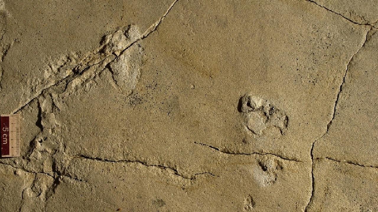 Кто, где, когда? Древние следы поставили под сомнение эволюционную историю человечества