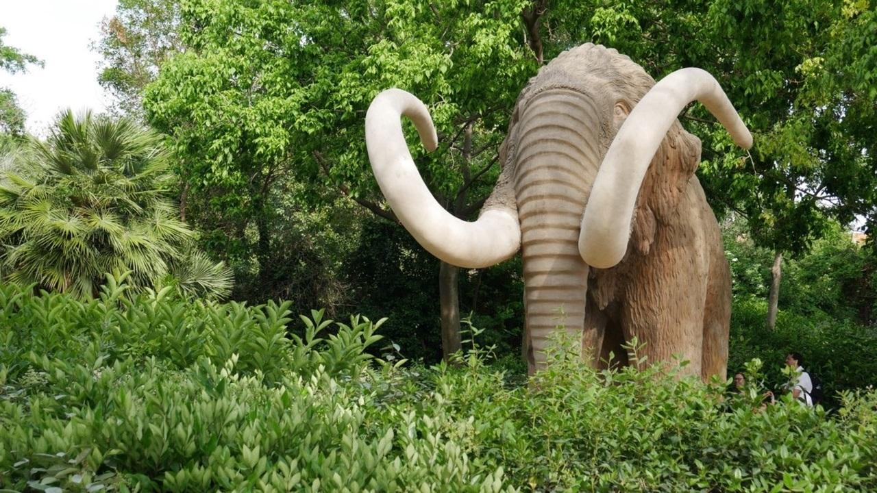 Риск вымирания зависит от размера животного. Черный список
