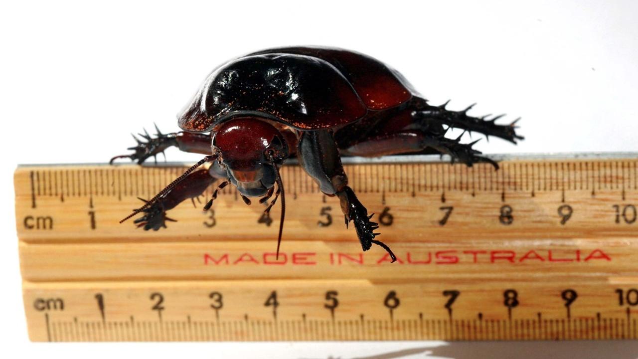 Древнее динозавров: учёные выяснили, где и когда появились первые тараканы