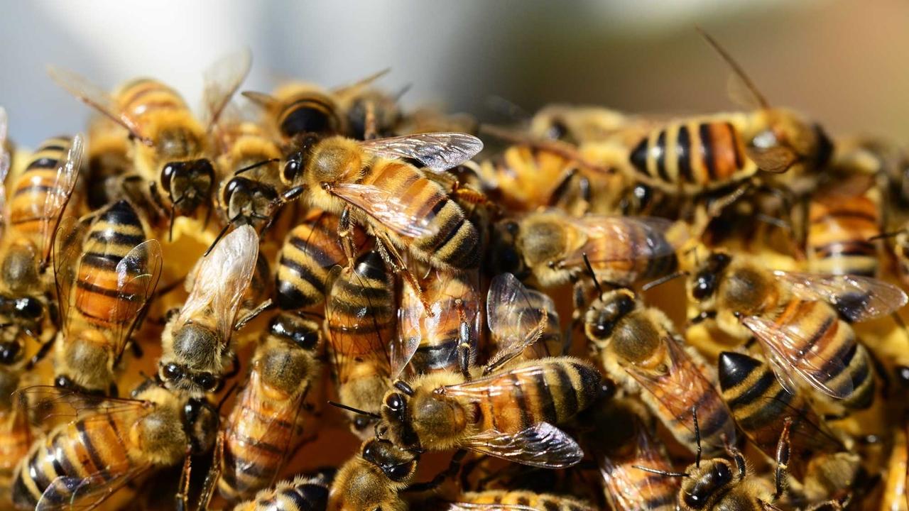 Пчёлы раскрывают учёным секреты работы человеческого мозга