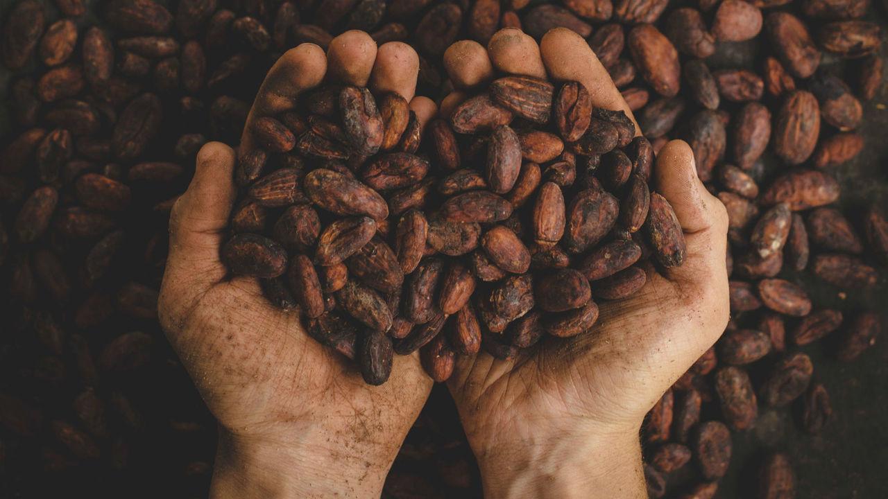 Вкус, аромат и полезные свойства шоколада диктует температура обжарки какао-бобов