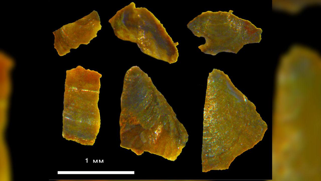 Ископаемые раковины рассказали о жарком Заполярье 500 миллионов лет назад