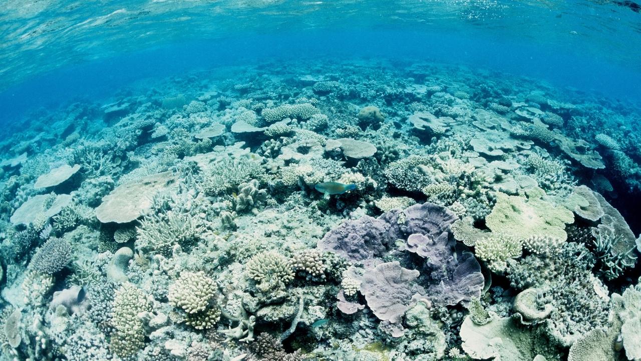 Роботы-аисты засеют Большой Барьерный риф новыми кораллами