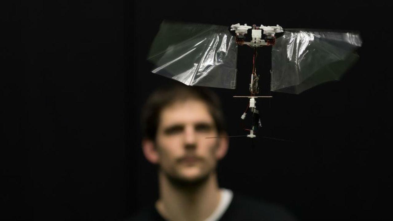 Маневренный крылатый дрон раскрывает секреты полёта насекомых