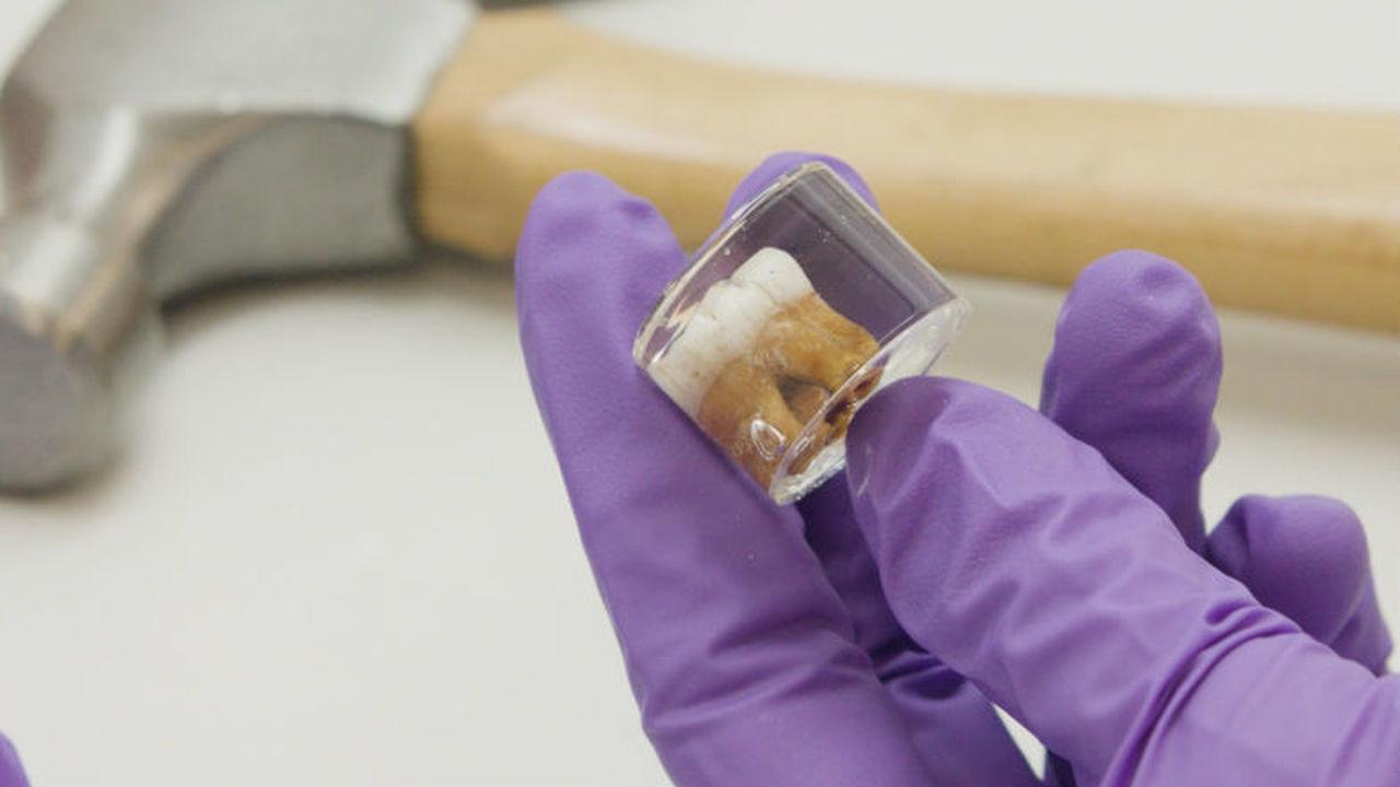 Анализ зубов неандертальских детей продемонстрировал тяжёлые условия их жизни